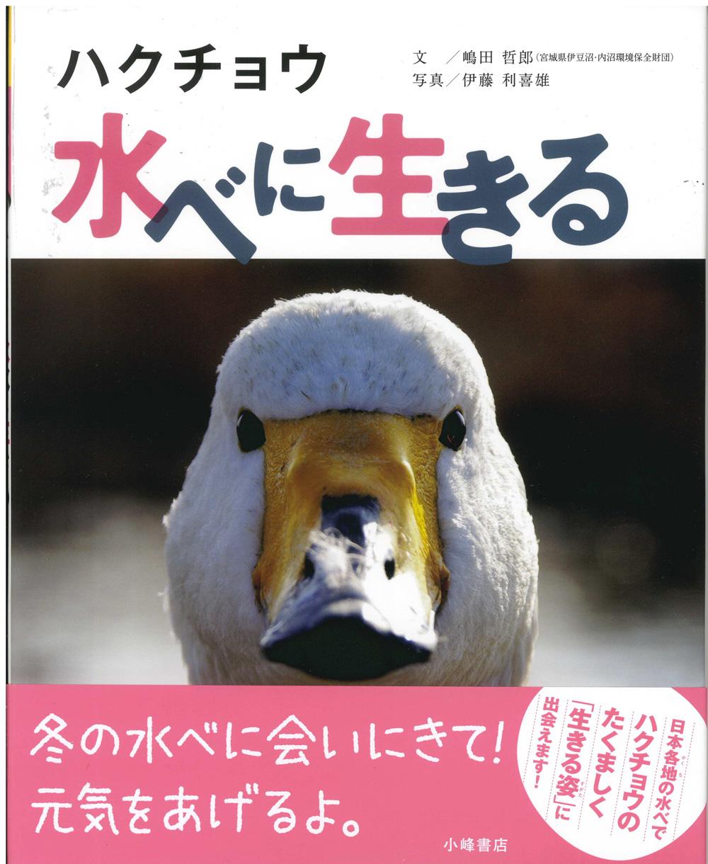 嶋田ハクチョウ.jpg