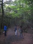 aokigahara1.jpg
